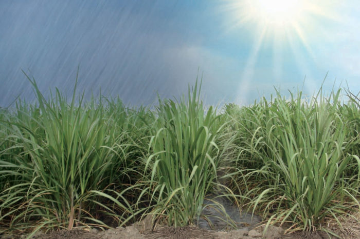 Prioritized water balance for scheduling irrigation in sugar cane. Methodological guide