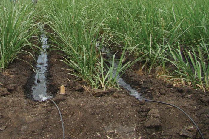Riego con caudal reducido en cultivos de caña de azúcar. Guía metodológica