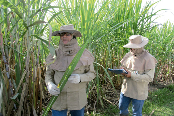 Phytopathological inspection service in the field and laboratory
