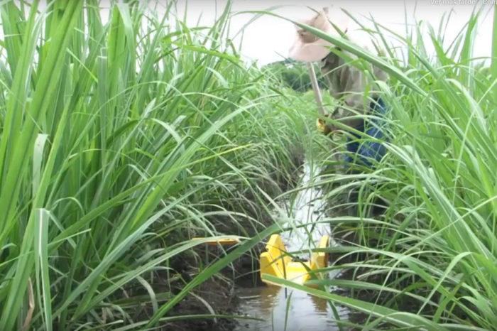 Determinación del volumen de agua aplicado por hectárea en el riego del cultivo de caña de azúcar