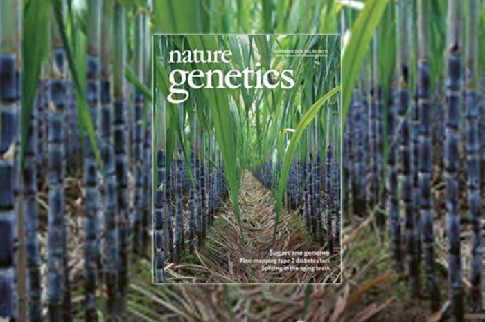 Investigación de Cenicaña en Nature Genetics