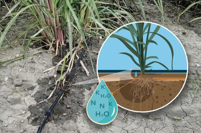Riego por goteo en el cultivo de la caña de azúcar