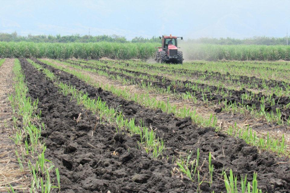 Programa de agronomía