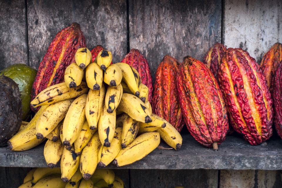 Mujeres en la ciencia: agricultura sostenible en Colombia