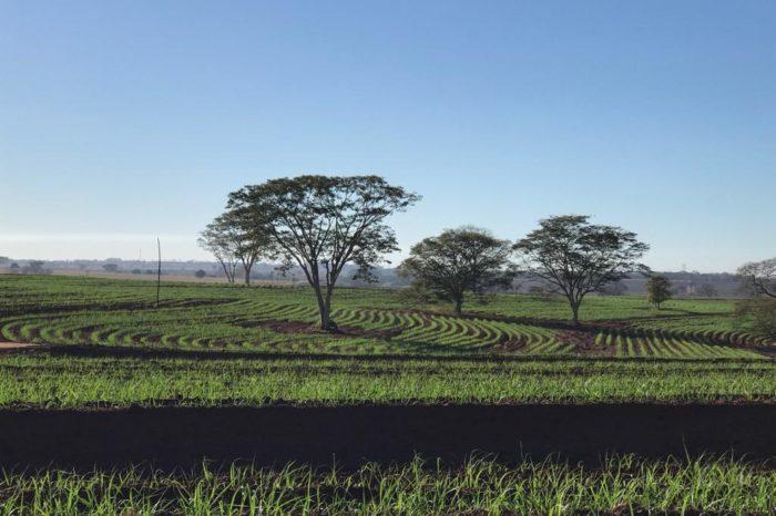 Manuelita, primer productor de etanol en Brasil en obtener certificación RenovaBio al 100% del área cultivada