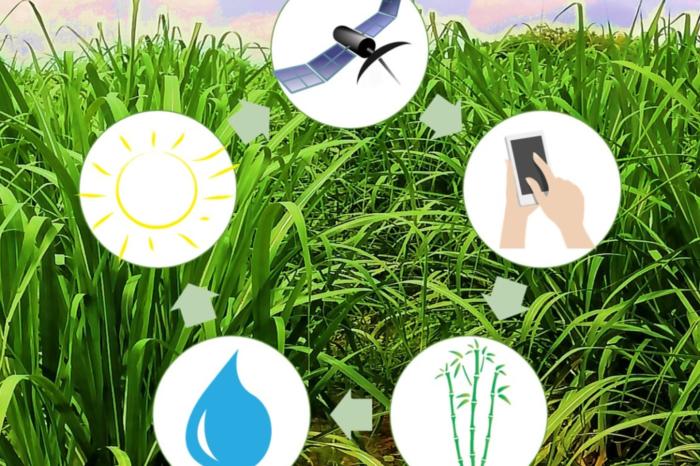 Apps móviles para el monitoreo de cultivos, 15-abr-2020
