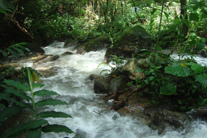Agua: insumo básico para la planeación en un predio, 20-may-2020