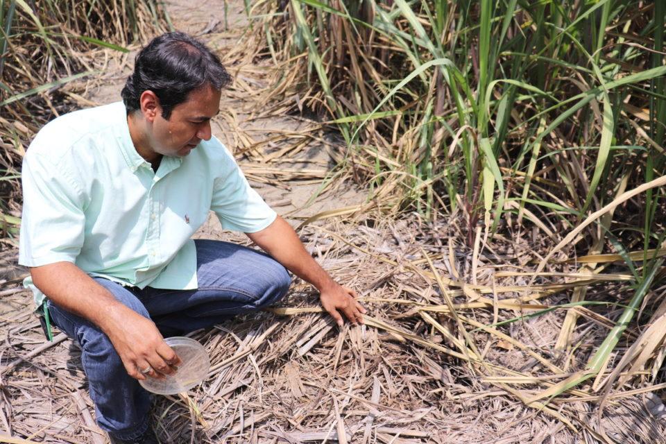 Importancia de las formas de carbono del suelo para la gestión sostenible en sistemas de cultivo de caña de azúcar , 10-jun-2020