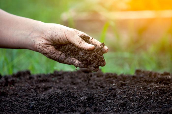Se requiere: Microbiólogo de suelos